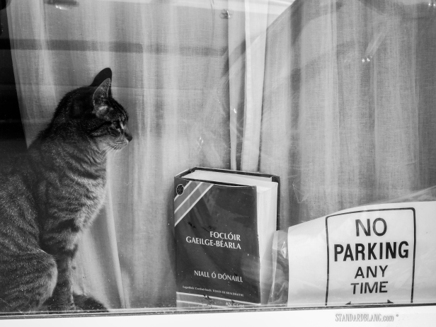 Cat book no parking BW